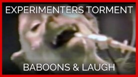 Experimenters Inflicted Traumatic Head Wounds on Baboons & Laughed about It