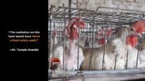Experts React to Undercover Investigation by Mercy For Animals