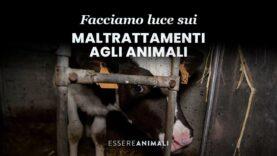 Facciamo luce insieme sui maltrattamenti agli animali