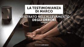 La testimonianza di Marco – Infiltrato negli allevamenti intensivi