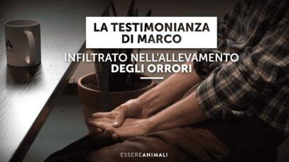 La testimonianza di Marco - Infiltrato negli allevamenti intensivi