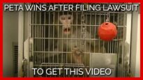 PETA Wins After Filing Lawsuit to Get THIS Video