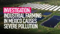 INVESTIGATION: Animal Equality Reveals Pollution from Mexico's Industrial Farms