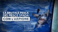La brutale pesca con l'arpione del pesce spada – Essere Animali