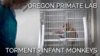 PETA Uncovers Torment of Infant Japanese Macaques in an Oregon Primate Laboratory