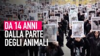 Animal Equality: 14 anni di lotta per i diritti animali!
