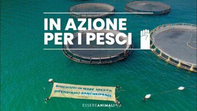 In azione davanti a un allevamento di pesci a La Spezia