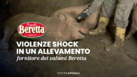 Pura crudeltà in allevamento dei salumi F.lli Beretta