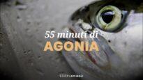 55 minuti di agonia - la morte dei pesci