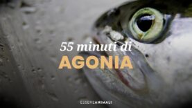 55 minuti di agonia – la morte dei pesci