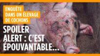 Dans l'horreur de l'élevage de cochons de Barrais-Bussolles (Allier)