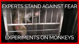 Experts Speak Out Against Government Fear Experiments on Monkeys
