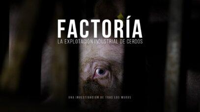 Factoría. La explotación industrial de cerdos. (Maltrato animal)