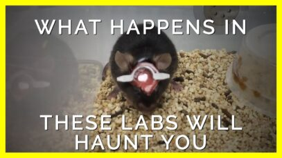 How Experimenters Get Away with Torturing Mice and Rats