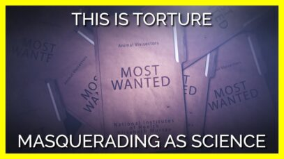 These Horrific Experiments on Animals Must End