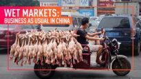 INVESTIGATION: Animal Equality Reveals China's Wet Markets Continue to Operate