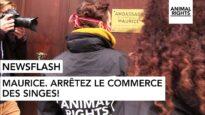 MAURICE: ARRÊTEZ LE COMMERCE DES SINGES!  | ANIMAL RIGHTS | FR