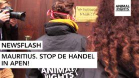 NEWSFLASH: MAURITIUS. STOP DE HANDELIN APEN! | VERVANG DIERPROEVEN | ANIMAL RIGHTS | NED