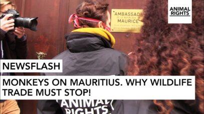 NEWSFLASH: MONKEYS ON MAURITIUS | REPLACE ANIMAL TESTING | ANIMAL RIGHTS