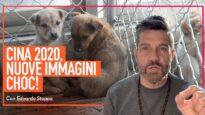 CINA 2020: il crudele commercio della carne di cani e gatti continua!