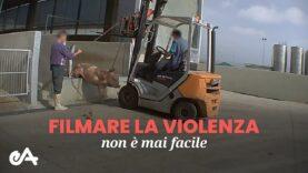 Filmare la violenza sugli animali non è mai facile – Essere Animali