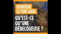 Foie gras : le débecquage des canetons