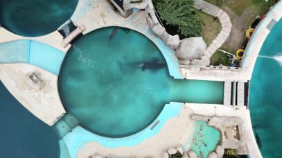 Lone Orca Kshamenk Is Confined to This Tiny Tank