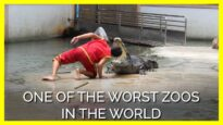 Animals Trapped at This Dilapidated Roadside Zoo Are Being Driven Insane
