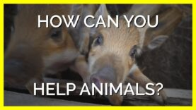 How to Help Animals With the Press of One Button