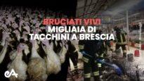 Bruciati vivi migliaia di tacchini a Brescia - Essere Animali
