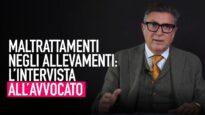 Crudeltà e maltrattamenti negli allevamenti intensivi: l'avvocato parla della lotta nei tribunali