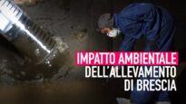 Impatto ambientale degli allevamenti intensivi: la nostra inchiesta a Brescia!
