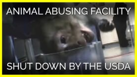 Animal Abusing Facility Shut Down by the USDA