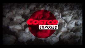 Costco's Response to an Undercover Investigation by Mercy For Animals