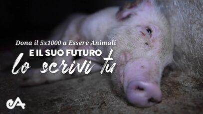Dona il 5x1000 a Essere Animali | difendiamo gli animali più sfruttati
