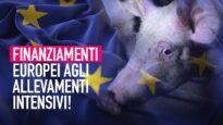 Finanziamenti europei agli allevamenti intensivi: ecco perché è inaccettabile