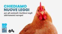 Nuova campagna per cambiare il futuro di milioni di animali in  Europa