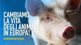 Una campagna europea per cambiare la vita degli animali negli allevamenti e nei macelli d'Europa!
