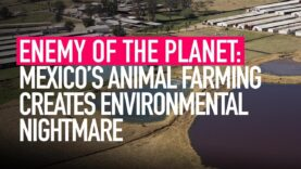 Animal Equality's Investigation Into Mexico's Factory Farms Shows Environmental Nightmare