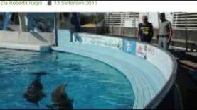 Chiudere i delfinari