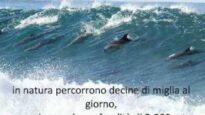 Maltrattamento e morte nei delfinari