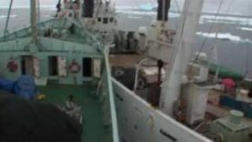 Sea Shepherd in azione