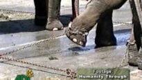 Stop alla sofferenza degli animali nei circhi