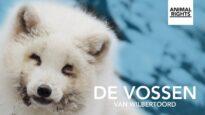 De vossen van Wilbertoord | Documentaire | Animal Rights