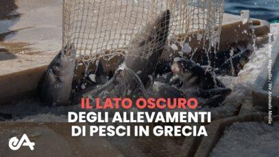 Nuova indagine: il lato oscuro degli allevamenti di pesci in Grecia | Essere Animali