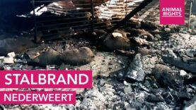 Stalbrand | Nederweert | Animal Rights