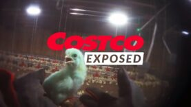 Why Is Costco's $4.99 Rotisserie Chicken So Cheap?