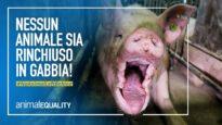 Animali rinchiusi in gabbie minuscole: cambiamo la legge europea
