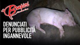 Crudeltà nel maxi-allevamento tra le sedi di Bompieri – la denuncia di Animal Equality continua