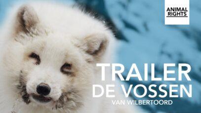 De vossen van Wilbertoord | Trailer | Documentaire